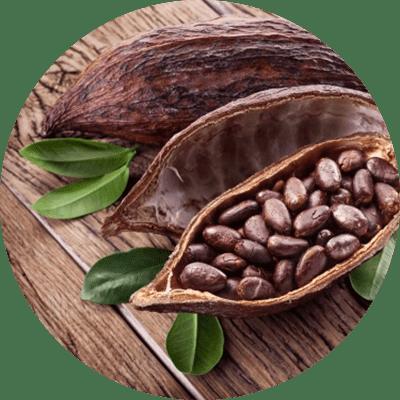 Gesund mit Kakaonibs